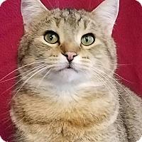 Adopt A Pet :: Gavin - Colfax, IA