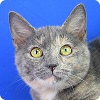 Adopt A Pet :: Beth - Carencro, LA