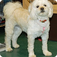 Adopt A Pet :: Molly - Lutherville, MD