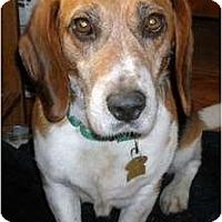 Adopt A Pet :: Schewbo - Novi, MI