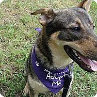 Adopt A Pet :: Socks - Wilmette, IL