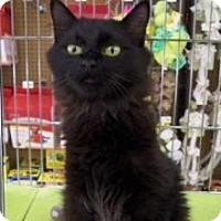 Adopt A Pet :: Blane N - Sacramento, CA