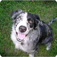 Adopt A Pet :: Moose - Orlando, FL
