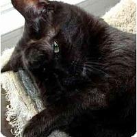 Adopt A Pet :: Darla - Reston, VA
