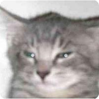 Adopt A Pet :: Starr - Lombard, IL
