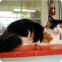 Adopt A Pet :: Momsicle - El Cajon, CA