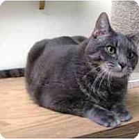 Adopt A Pet :: Clyde - Milwaukee, WI