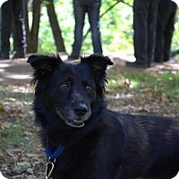 Adopt A Pet :: Ebony - Phoenix, AZ