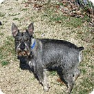 Adopt A Pet :: RADAR (SRC#1706) in VA
