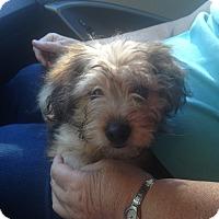 Adopt A Pet :: Jasper - Hazard, KY