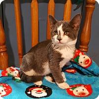 Adopt A Pet :: Hopkins - Trevose, PA