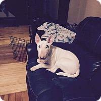 Adopt A Pet :: Thor - New York, NY