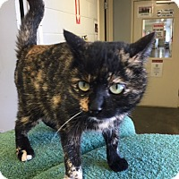 Adopt A Pet :: Trixie - Franklin, NC
