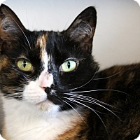Adopt A Pet :: Oodles - Sarasota, FL