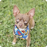 Adopt A Pet :: Teddy - Kingwood, TX