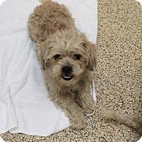 Adopt A Pet :: Nathan - Thousand Oaks, CA