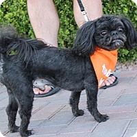 Adopt A Pet :: RAMBO - Las Vegas, NV