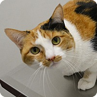 Adopt A Pet :: Honey - Springfield, IL