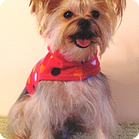 Adopt A Pet :: Abby - Osseo, MN