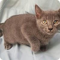 Adopt A Pet :: Iris - Aurora, CO