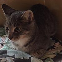 Adopt A Pet :: Debbie - Morganton, NC