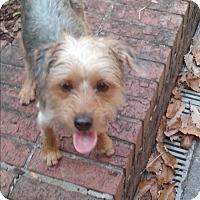 Adopt A Pet :: Jule - Russellville, KY