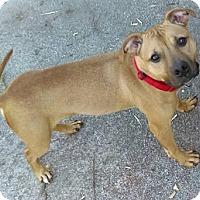 Adopt A Pet :: Penelope - Fort Wayne, IN