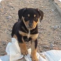 Adopt A Pet :: Maverick - Albuquerque, NM