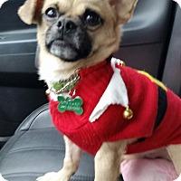 Adopt A Pet :: Gilbert - Cleveland, OH