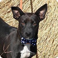 Adopt A Pet :: Warden - Pluckemin, NJ