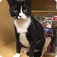 Adopt A Pet :: Twilight - Portsmouth, VA
