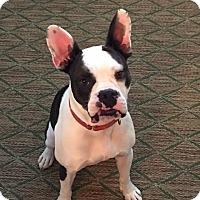 Adopt A Pet :: Rex *LOCAL* - Wakefield, RI