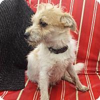 Adopt A Pet :: Bailey - Trenton, NJ