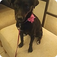Adopt A Pet :: Minnie - Davie, FL