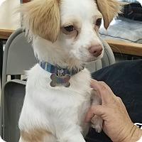 Adopt A Pet :: Julianna - Lodi, CA
