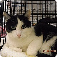 Adopt A Pet :: Domino - Riverside, RI