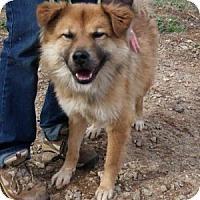 Adopt A Pet :: Uno - Athens, GA
