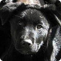 Adopt A Pet :: Baby Thunder - Oakley, CA