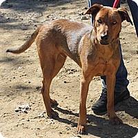 Adopt A Pet :: Astro - Wakefield, RI