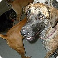 Adopt A Pet :: Ella - Richmond, VA