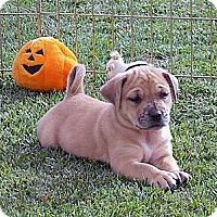 Adopt A Pet :: Petey - Broomfield, CO