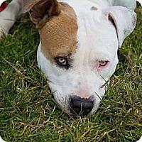 Adopt A Pet :: Charley URGENT - Sacramento, CA