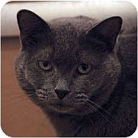 Adopt A Pet :: Farrah - St. Clements, ON