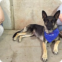 Adopt A Pet :: Layla - Keller, TX
