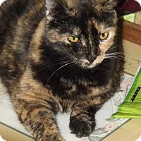 Adopt A Pet :: Mia - Mesa, AZ