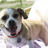 Adopt A Pet :: LoLa - Encino, CA
