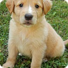 Adopt A Pet :: Babe Axle