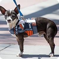 Adopt A Pet :: Ares - Phoenix, AZ