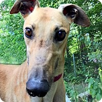 Adopt A Pet :: Wesley - Swanzey, NH