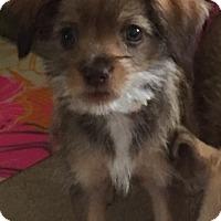 Adopt A Pet :: Gemma - Las Vegas, NV